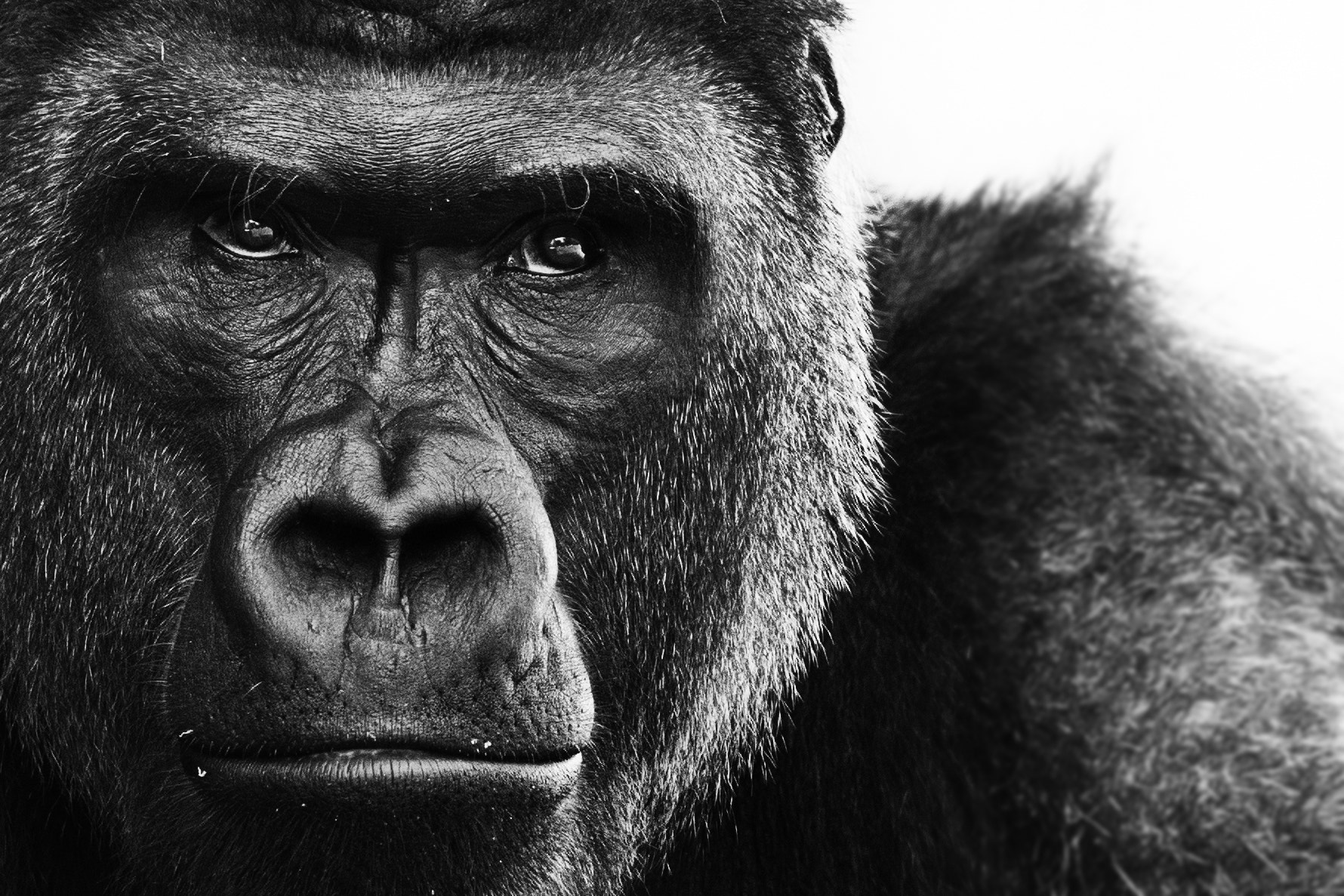 Photograph FW ZOO - AQ5P9852 by Jeff Vaillancourt on 500px