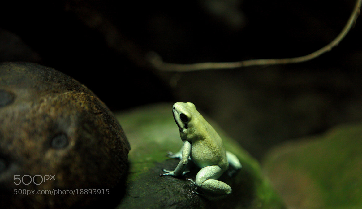 Photograph frog(= =) by 王 诗函 on 500px