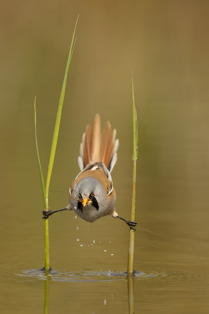 Photograph Mission Impossible by Edwin Kats on 500px