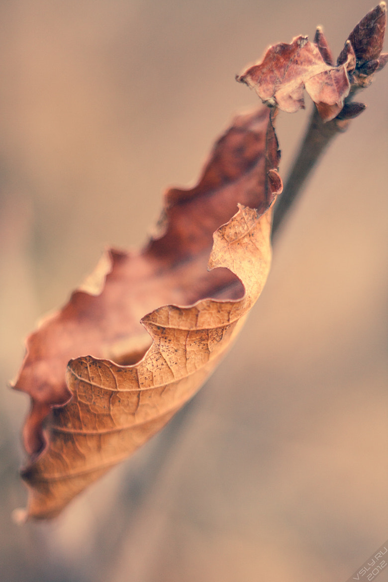 Photograph Close End of Autumn by Vasiliy Atutov on 500px