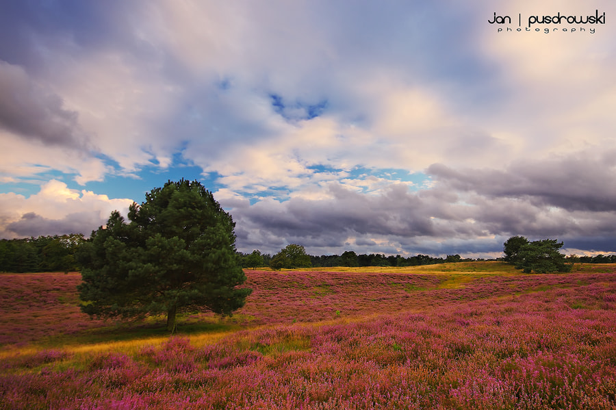 Photograph Purple Haze by Jan Pusdrowski on 500px