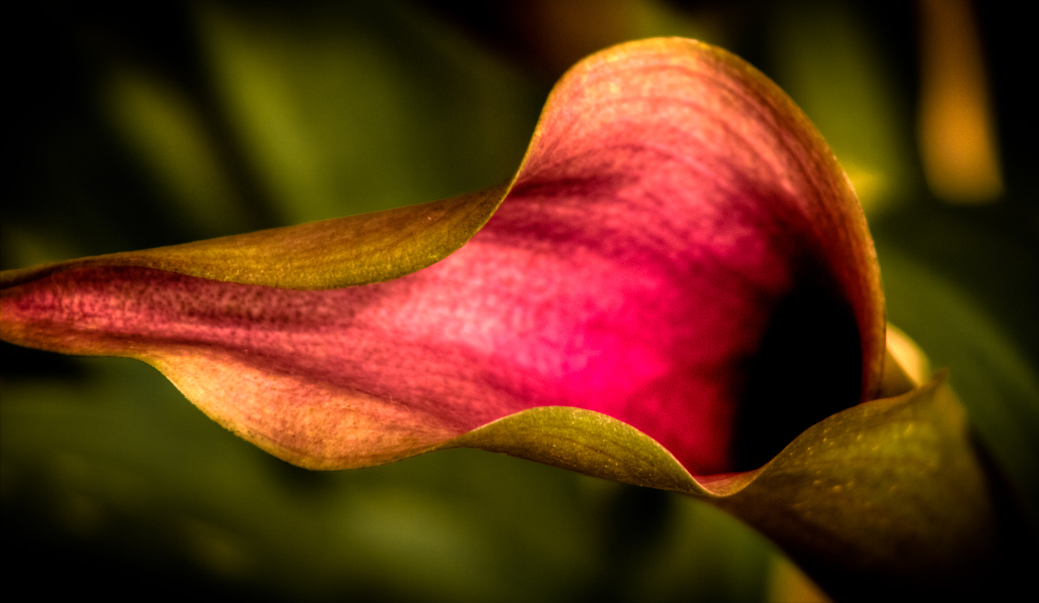 Photograph Lily2 by Arun Agrawal on 500px