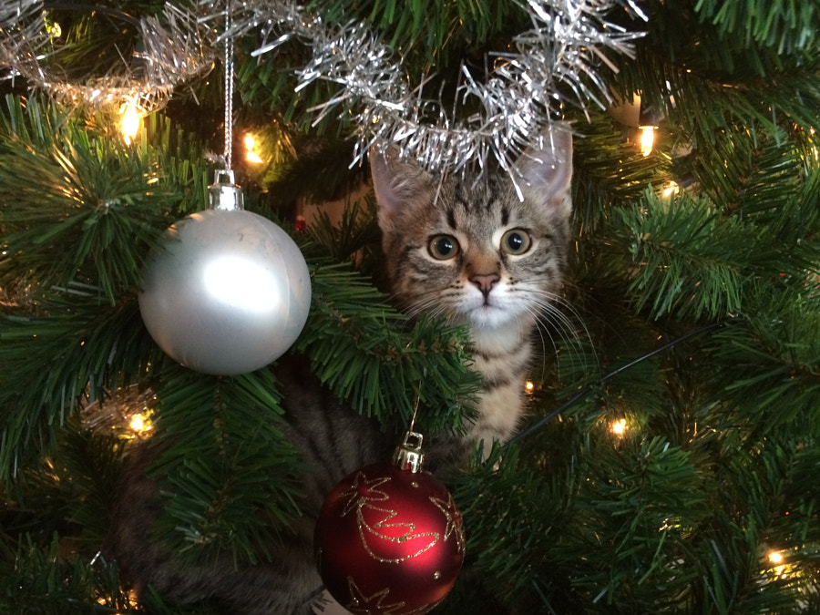 500px.comのMatthias FischerさんによるCat in Christmas tree