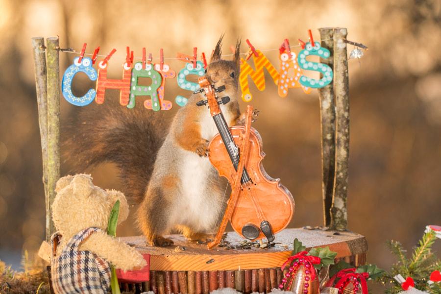 christmas cello concert by Geert Weggen on 500px.com