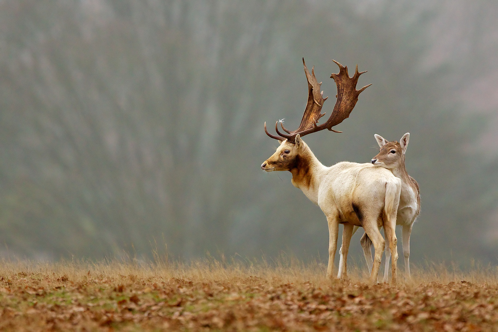 Photograph lean on me... by Mark Bridger on 500px