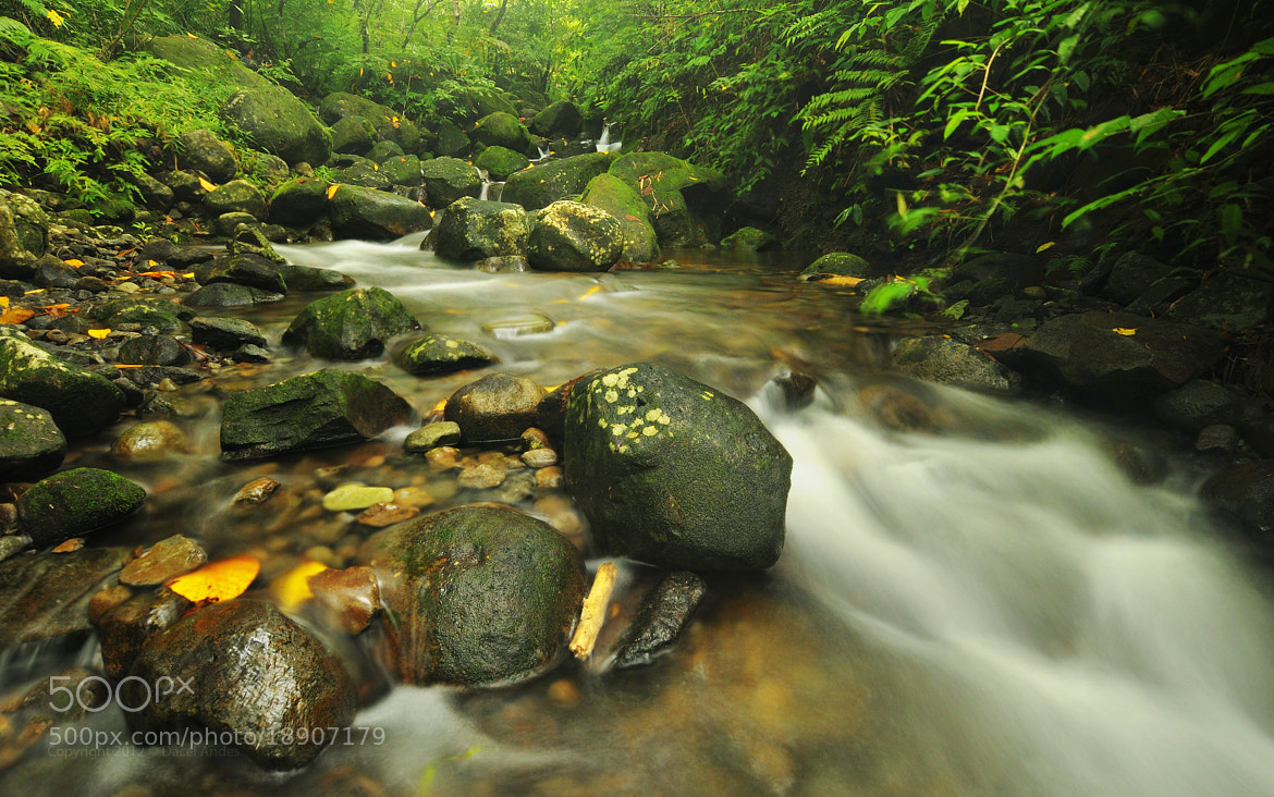 Photograph Pure Nature II by Dacel Andes on 500px