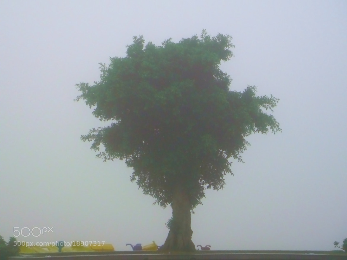 Photograph Lonely tree in the fog by Shiping Zhou on 500px