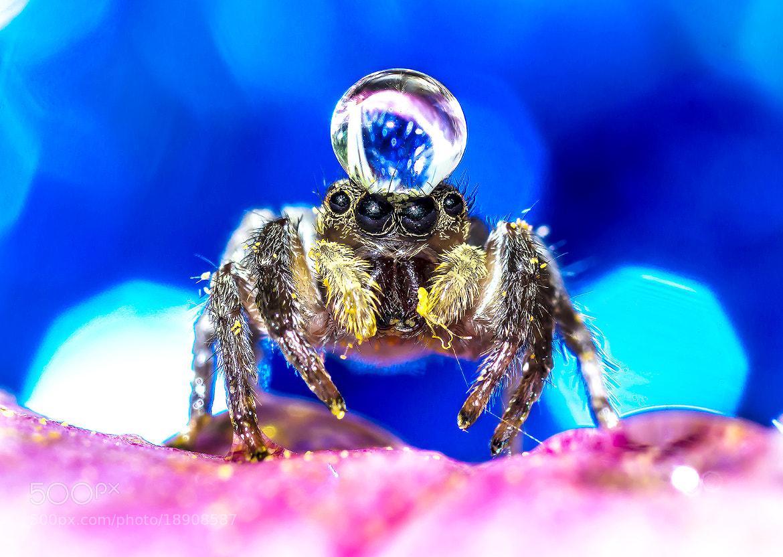 Photograph Spider by OKAWA โอ๋กะหว้า. somchai on 500px