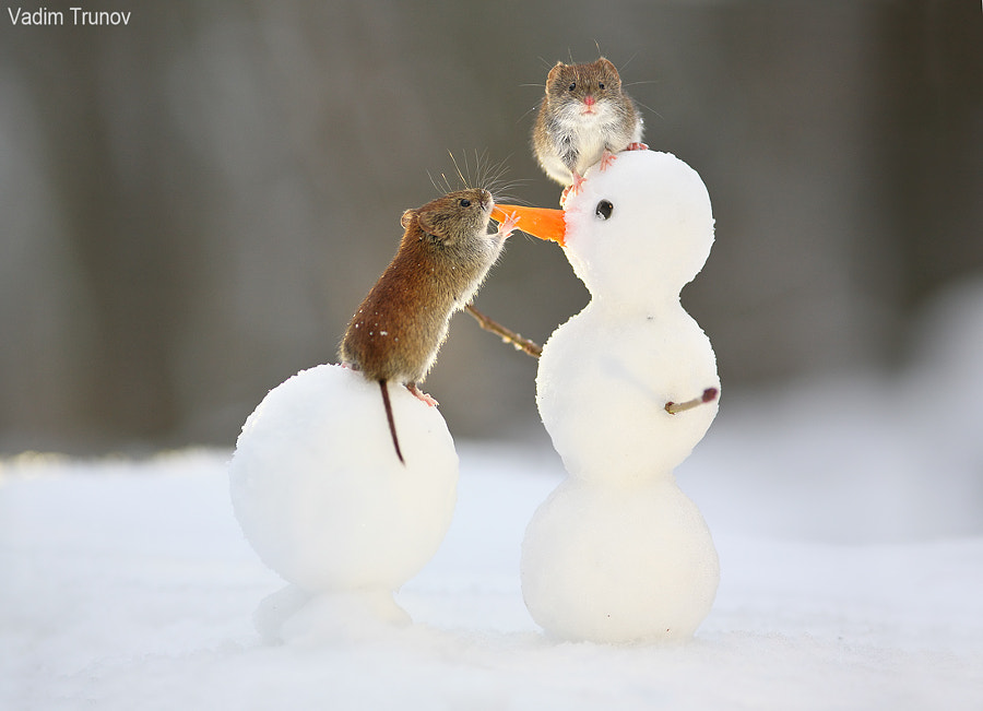 Mouse and snowman by Vadim Trunov on 500px.com