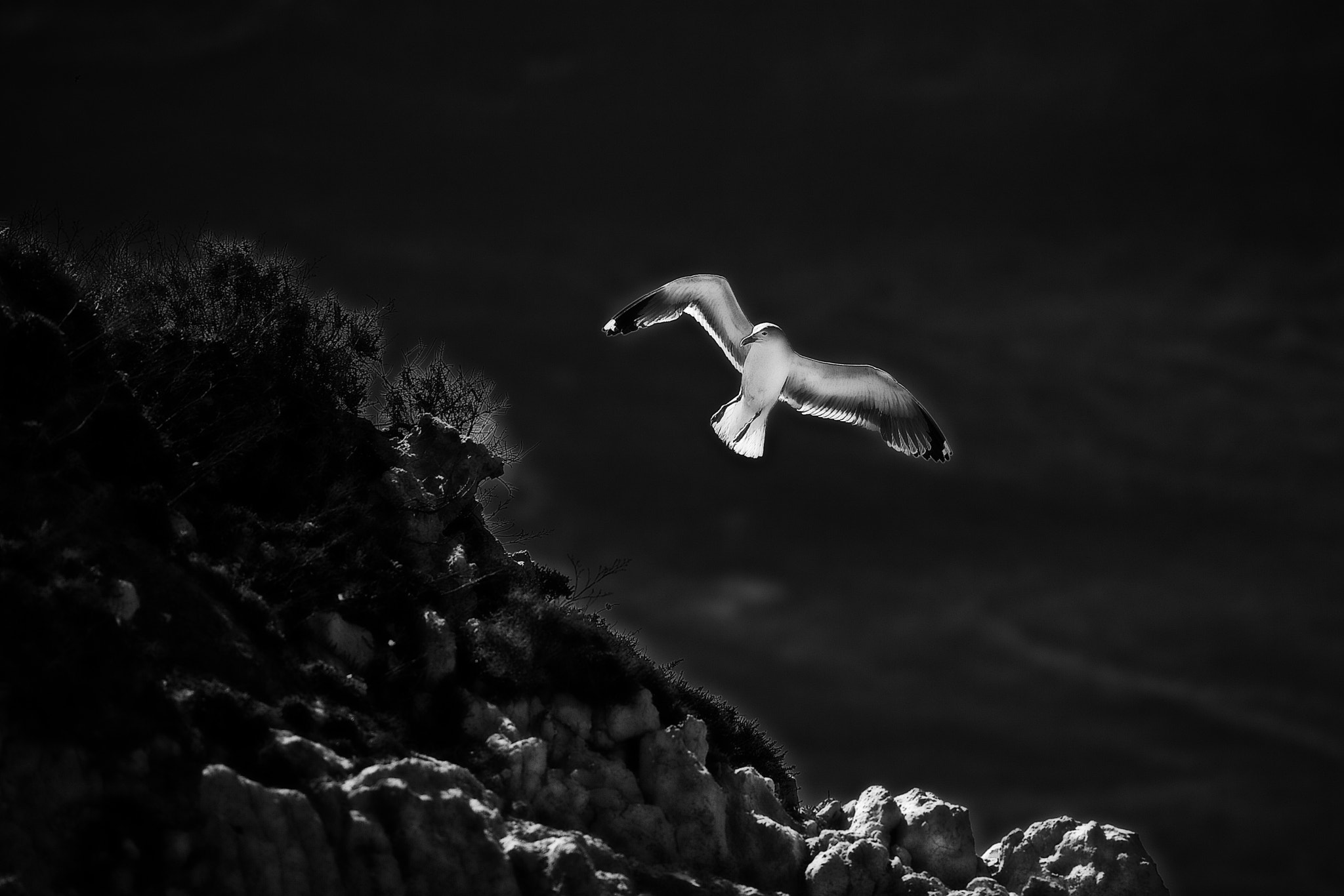 Photograph Light my wings by Ricardo  Alves on 500px
