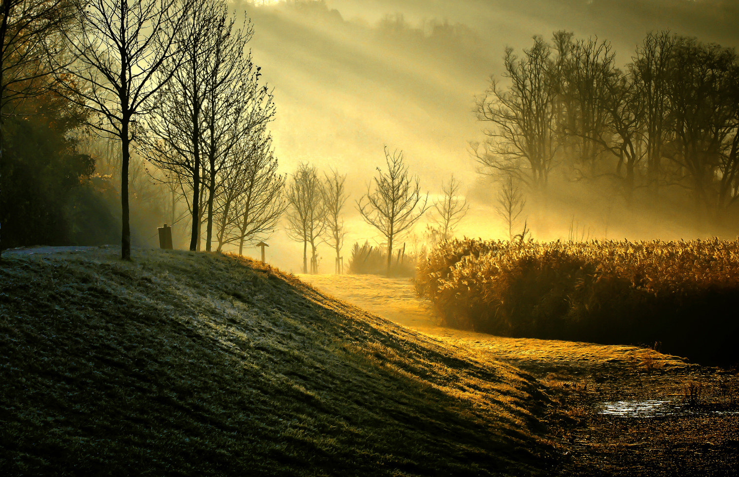 Photograph Morning rays by Andy 58 on 500px