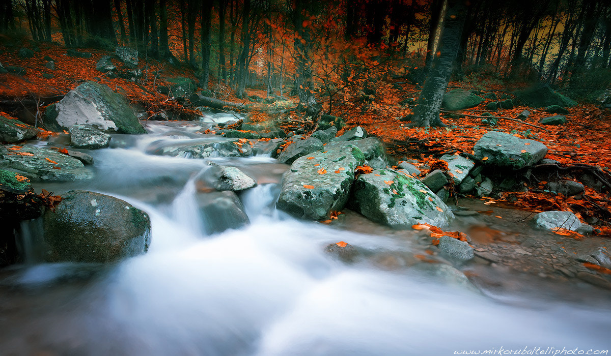 Photograph The colors of autumn by Mirko Rubaltelli on 500px