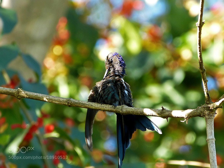 Photograph Sun Bath - Hummingbird by  Soli Rocha on 500px
