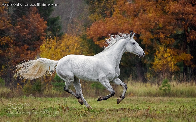 Photograph Yunona by Alla Berlezova on 500px