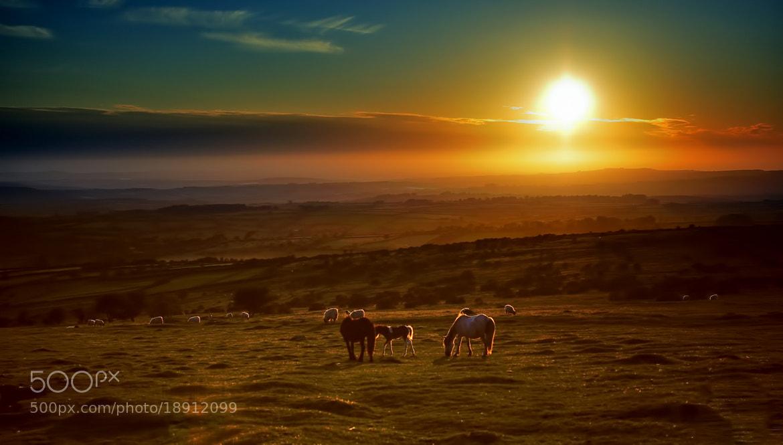 Photograph Devon Heaven by Mickhay  on 500px