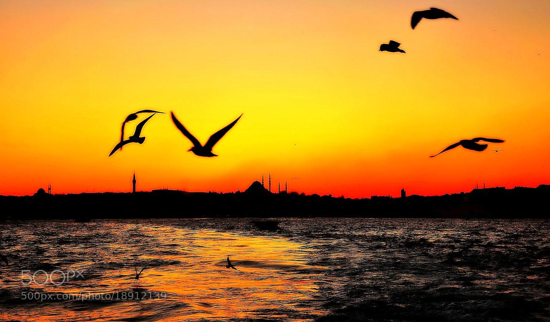 Photograph Özgürce uçmak 2 by ömer yücel on 500px