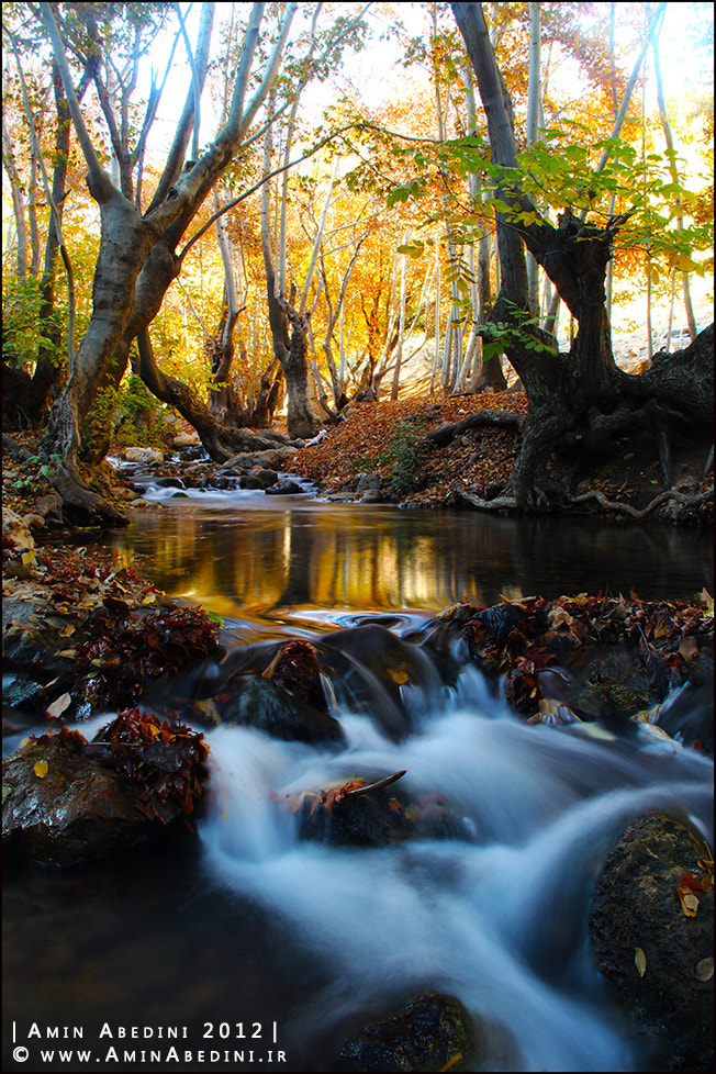 Photograph Autumnal Scene... by Amin Abedini on 500px