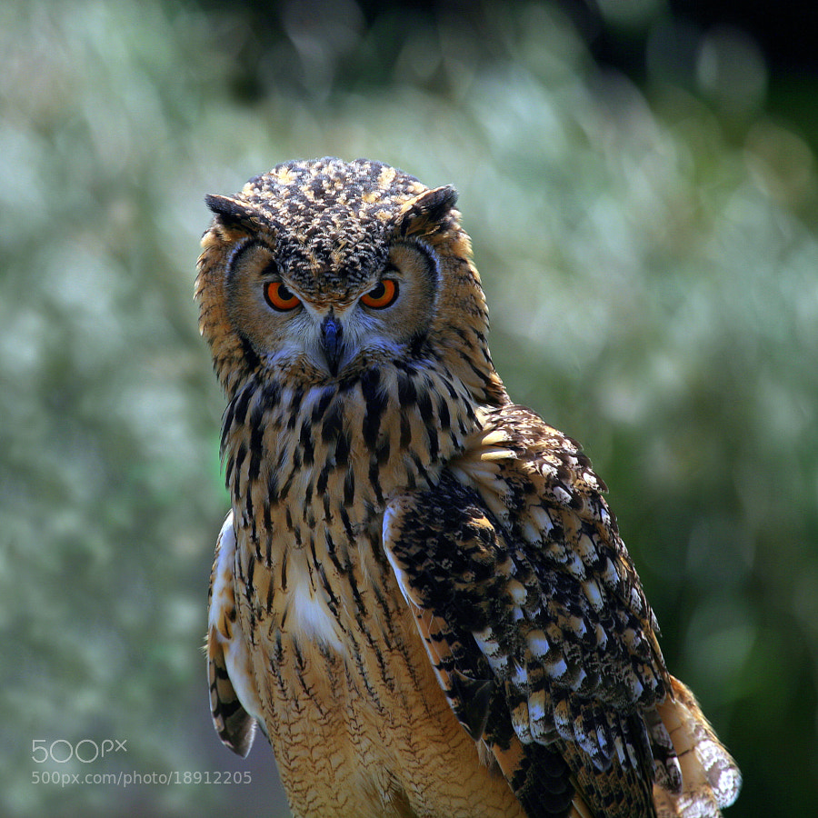 Photograph Eyes of Warrior by yume . on 500px