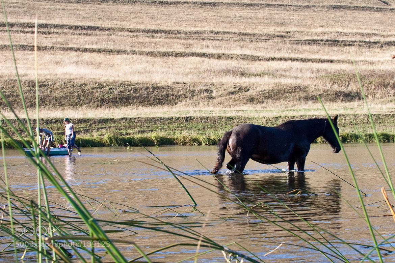 Photograph Купание обычного коня by Sergey Popov on 500px