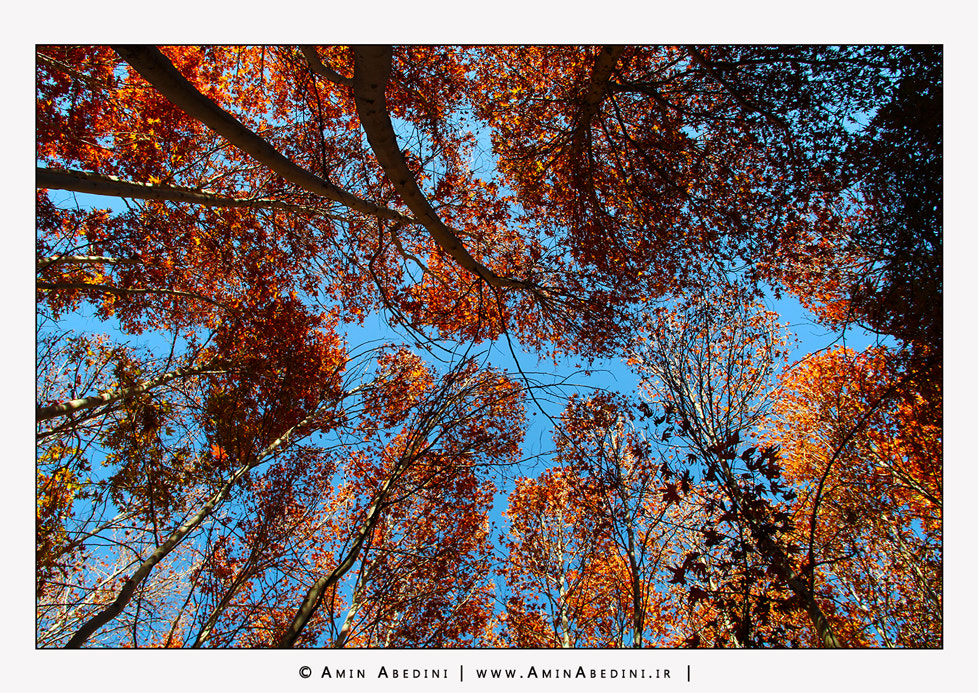 Photograph Autumn is Here... by Amin Abedini on 500px