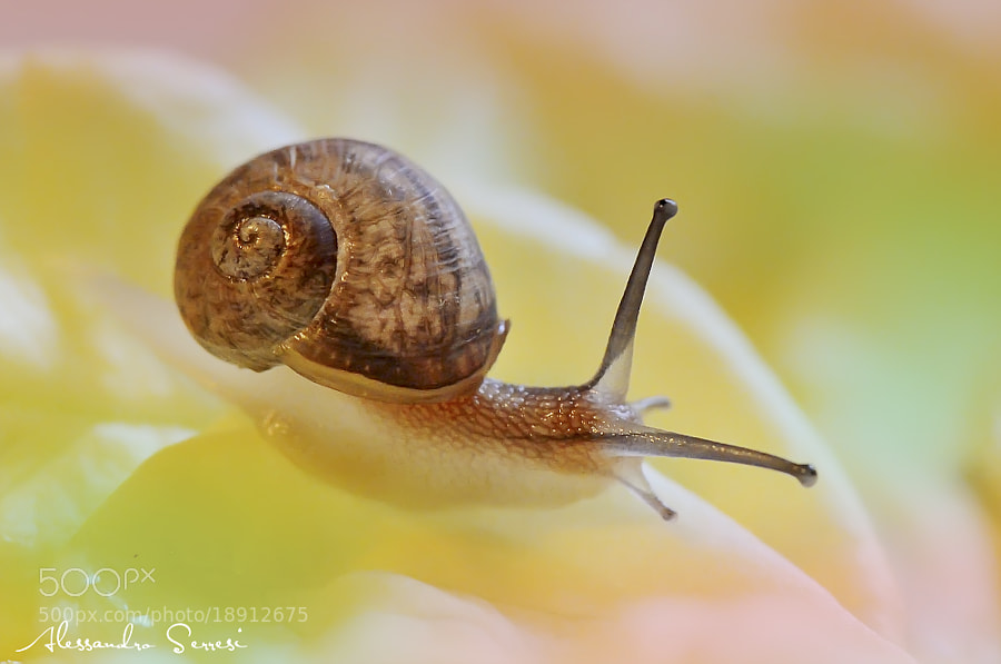 Photograph SNAIL by Alessandro Serresi on 500px