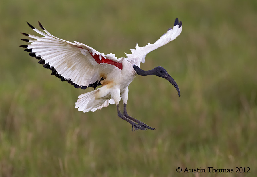 Photograph Coming in to land... by Austin Thomas on 500px