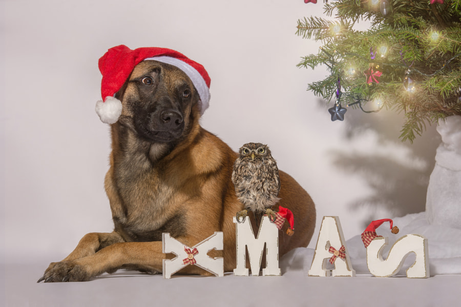 X-Mas by Tanja Brandt on 500px.com
