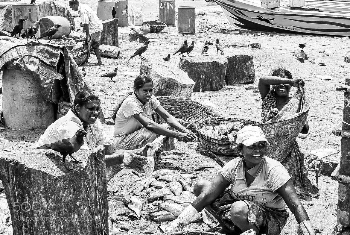 Photograph Negombo - The Fishing Market by julian john on 500px