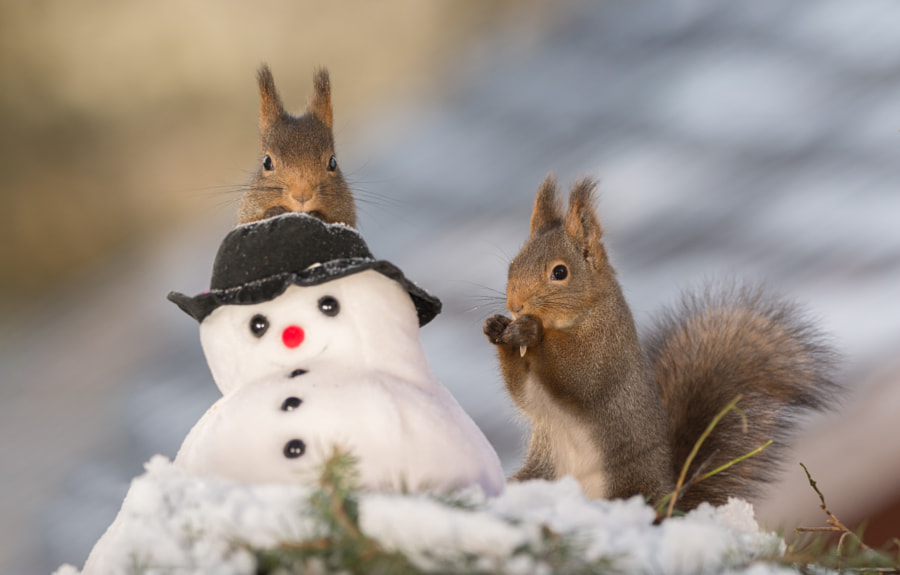 snowman gets visit by Geert Weggen on 500px.com