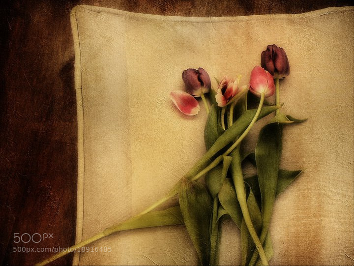 Photograph tulips by stuart kerr on 500px