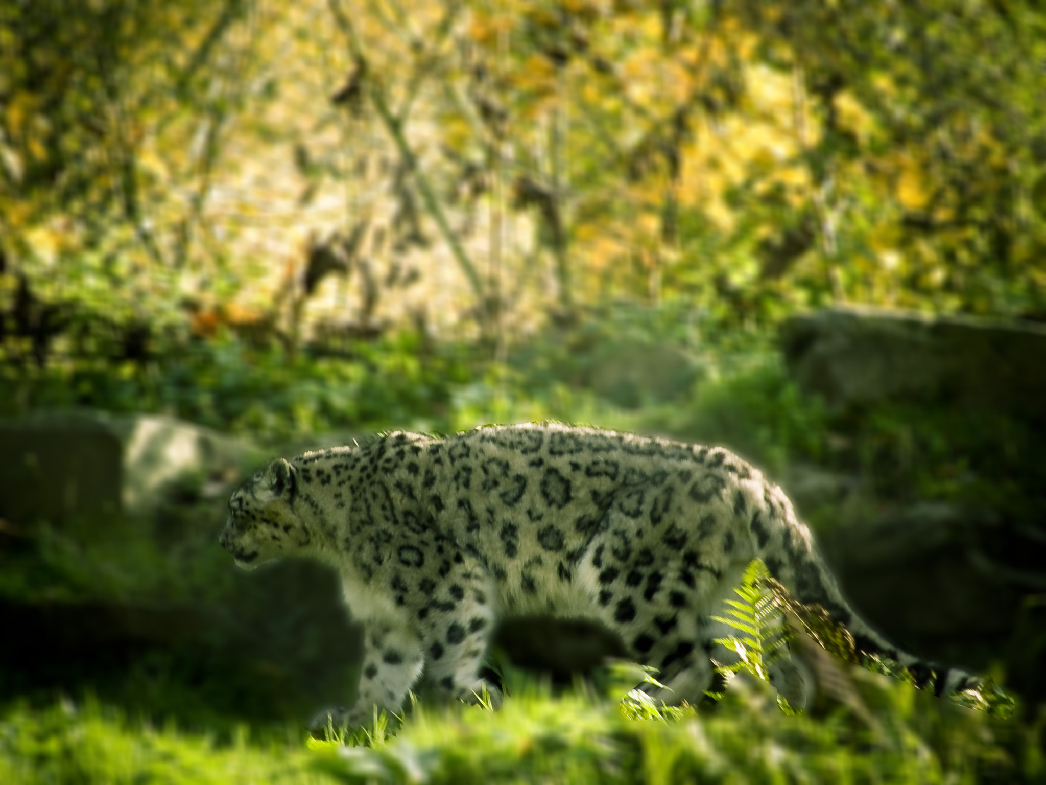 Photograph WHERE ARE MY CUBS  by oeth 0401 on 500px
