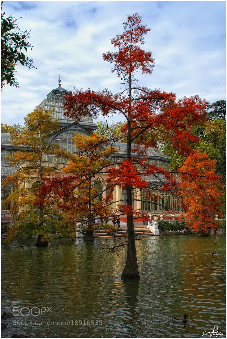 Photograph Autumn in Madrid (Spain) by Manuel Lancha on 500px