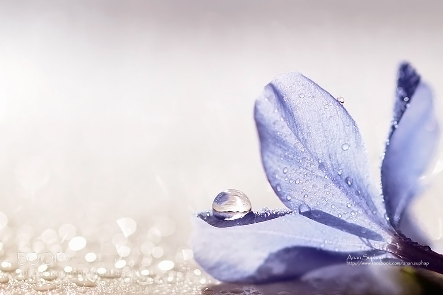 Photograph Flower in my heart. by Anan Suphap on 500px
