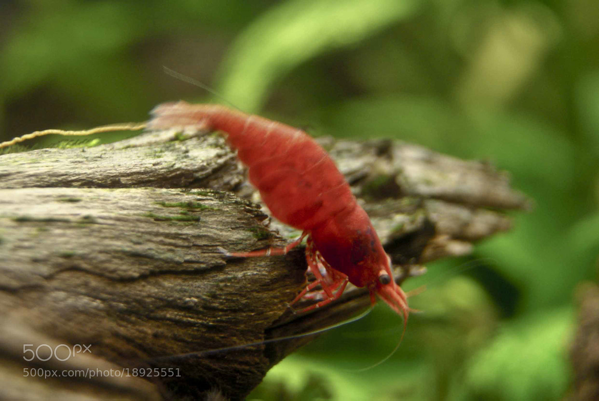 Photograph Small creature by Nina  on 500px