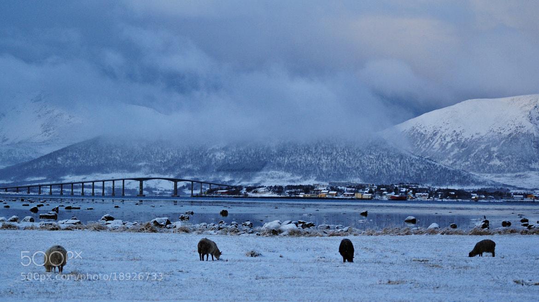 Photograph Winter Wonderland #2 by Caroline Kind on 500px