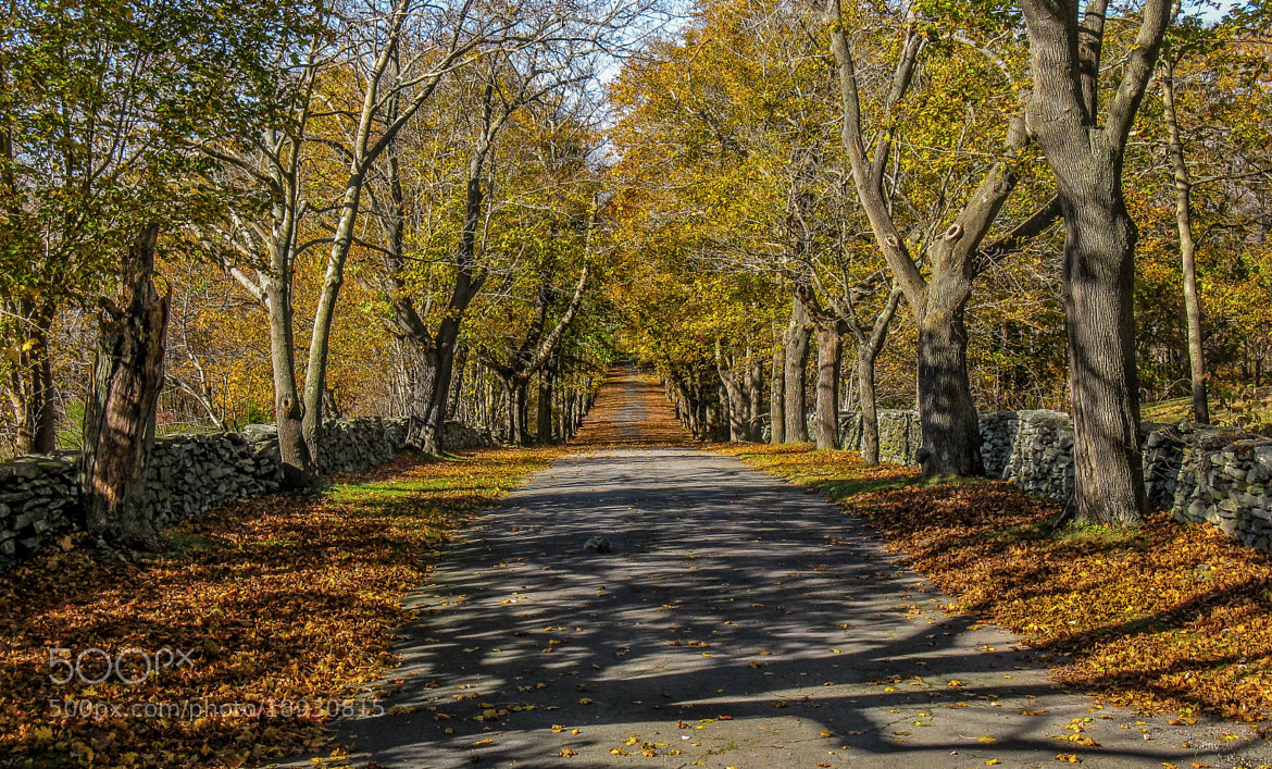 Photograph Fall: the road by Glenn DiPaola on 500px
