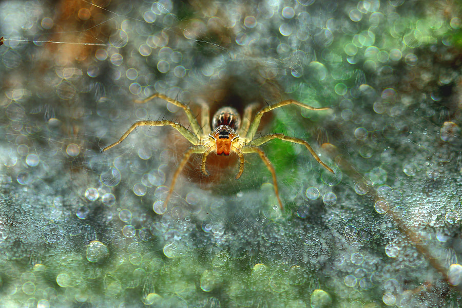Spider, Bokeh by Muhammad Roem on 500px.com