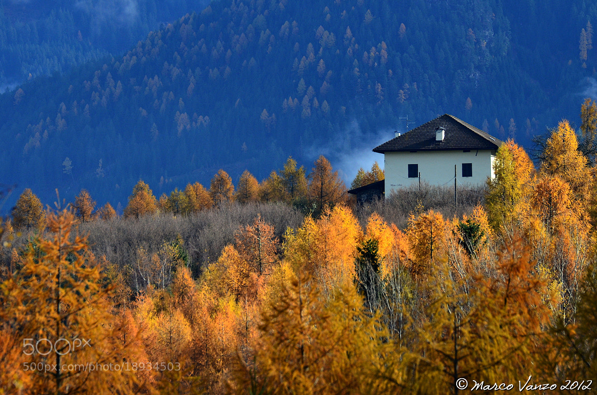Photograph Yellow by Marco Vanzo on 500px