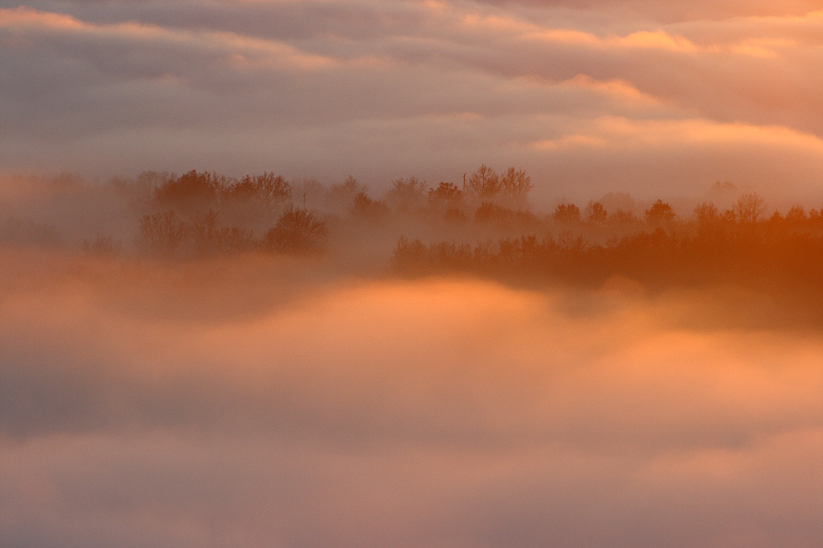 Photograph Mist (2) by Jérôme Bussière on 500px