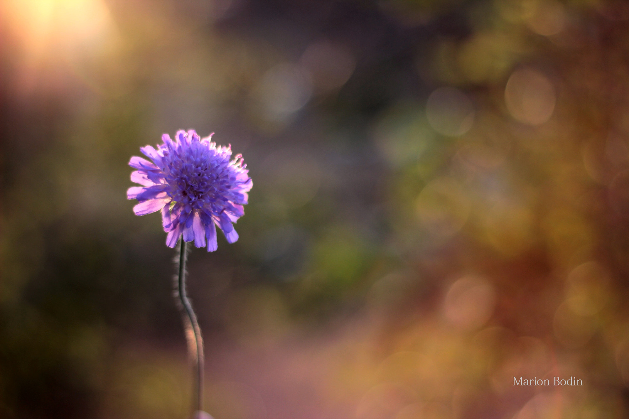 Photograph forget the flowers because the flowers never last for ever by Marion Bodin on 500px