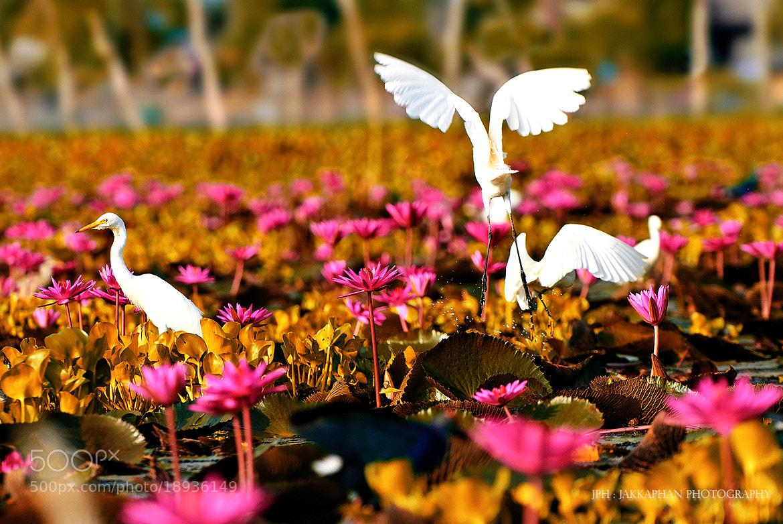 Photograph Wetlands by Jakkaphan Hirunviriya on 500px