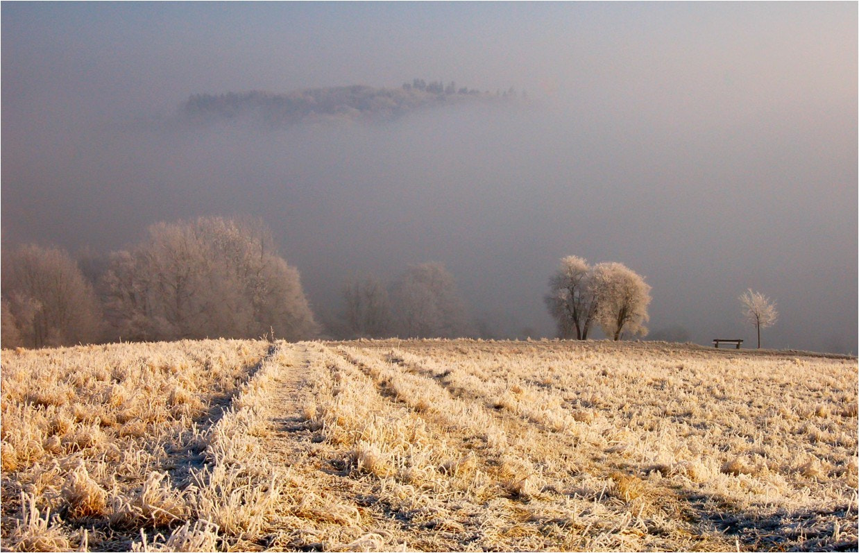 Photograph misty morning by Ulrich Fleischer on 500px