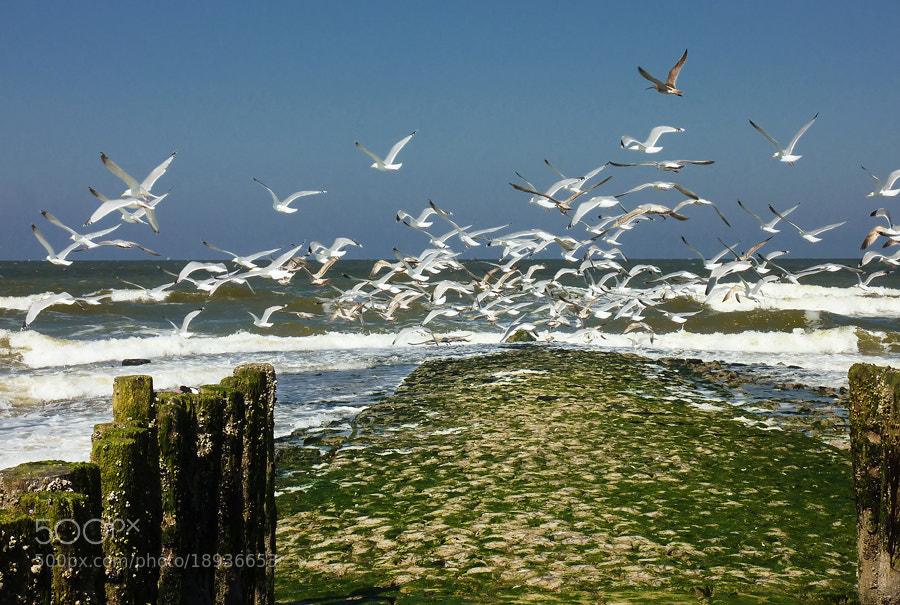 Photograph The Flock by Deen Guldemond on 500px