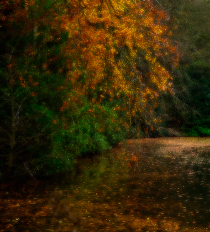 Photograph Fallen Leaves by Penny Myles on 500px