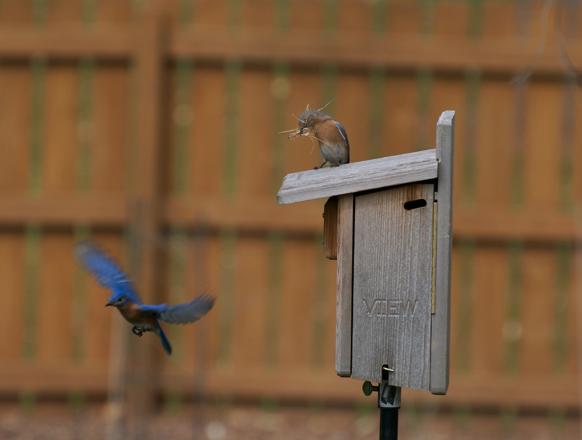 Photograph Bluebirds' New Home by Mark Jones on 500px
