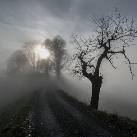Sun fights against autumnal fog