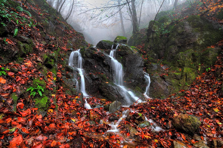 Photograph Autumn 5! by Asghar Mohammadi Nasrabadi on 500px