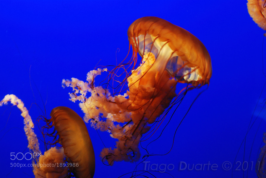 Photograph Medusa by Tiago Duarte on 500px