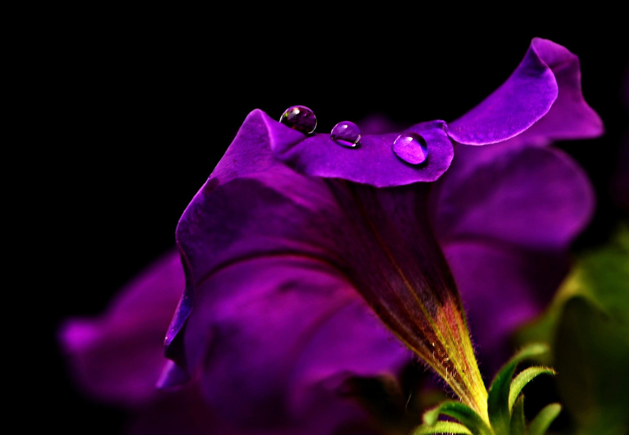 Photograph 3 Drops by Linda Y on 500px