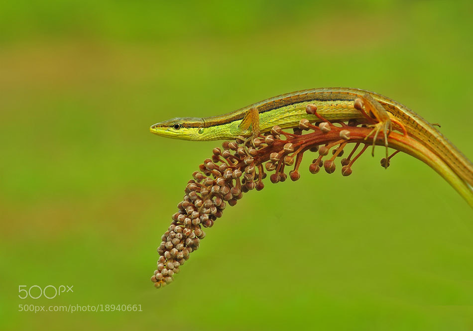 Photograph preparing to attack the enemy by Made Saputra on 500px